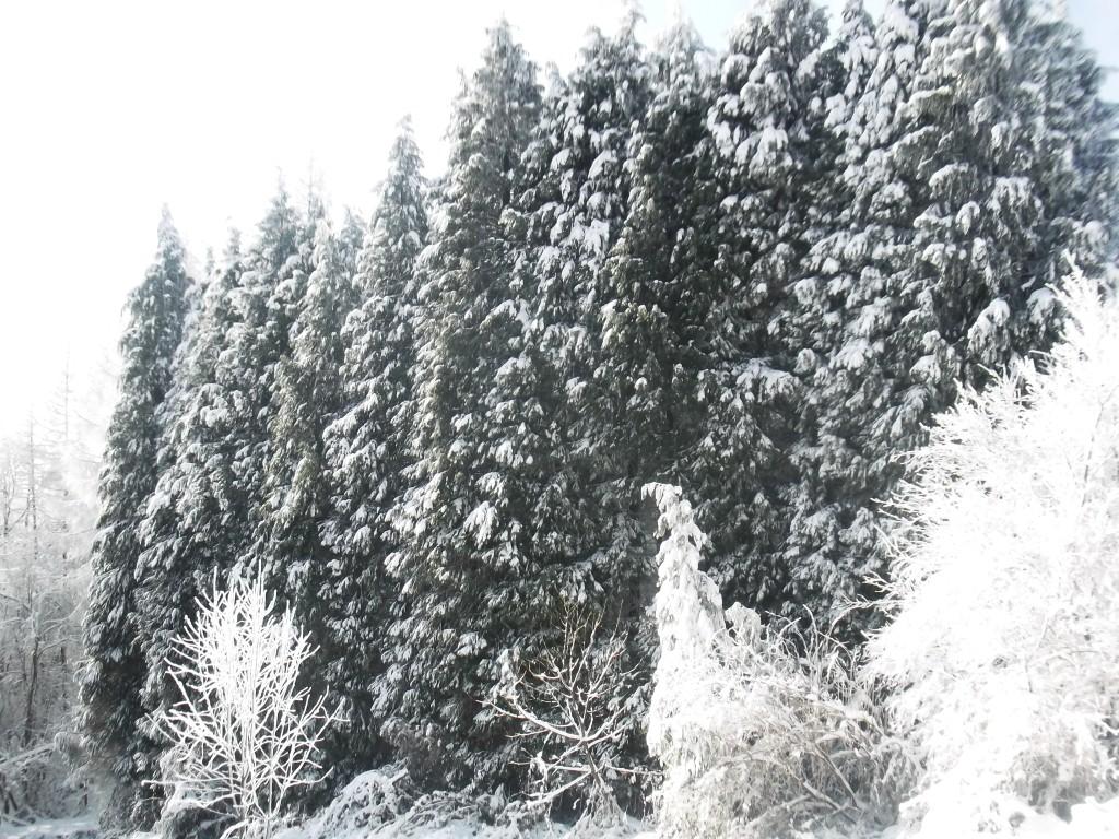 jelova gora