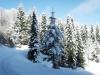 jelova gora lepotica