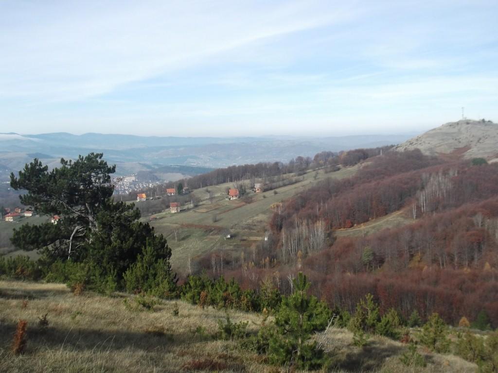 zlatiborski bor