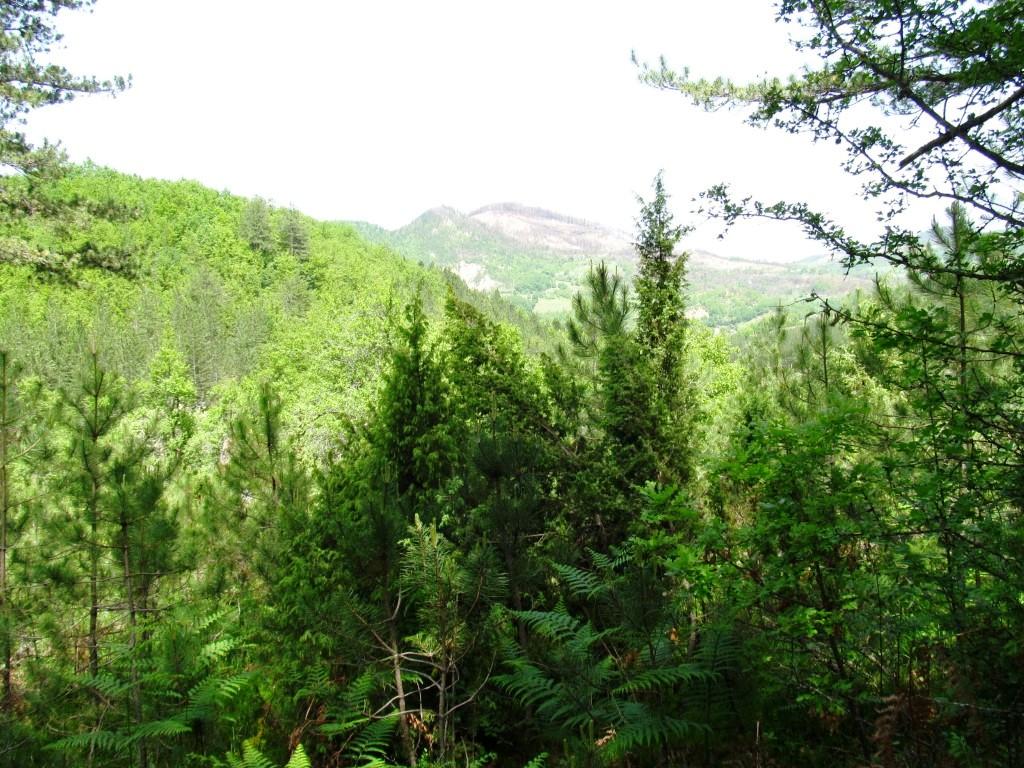 planinarski vidici