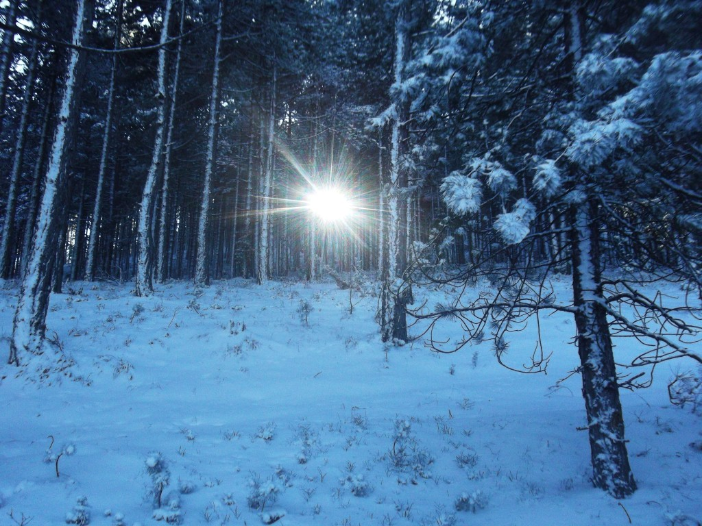 zlatibor i sneg